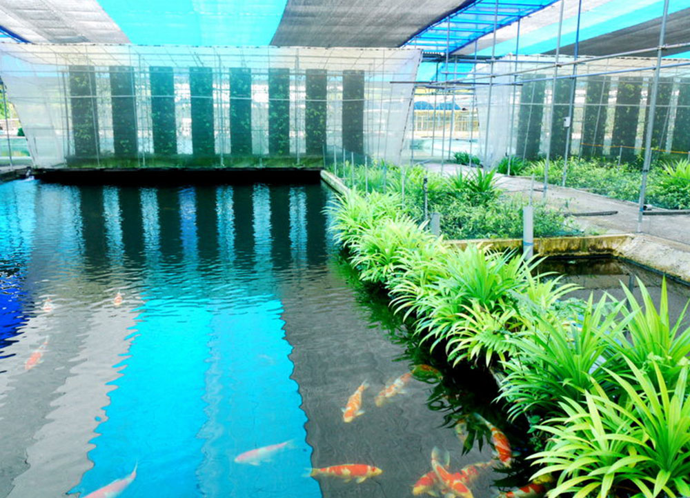 Nippon Koi Farm Pte Ltd