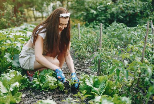 Why Gardening is Good for You and the Environment?